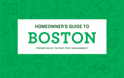 Homeowner's Guide to Boston